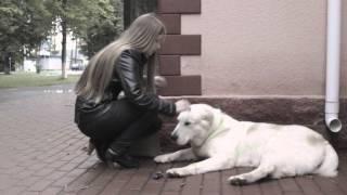 Социальная реклама про адрессники для собак