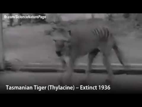 EXTINCTION -  ANIMALS THEY EXTINCT