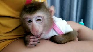 Monkey Baby Nui Mom, let Nui sleep