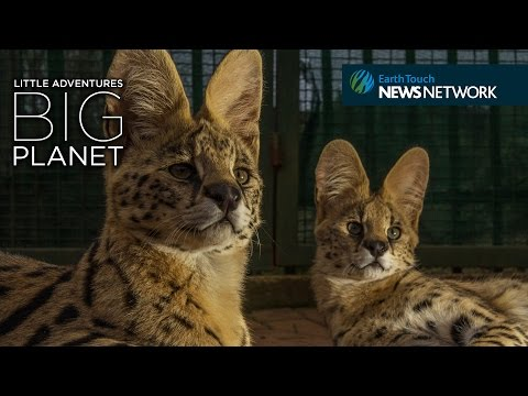 Rescued wild cats get a second chance