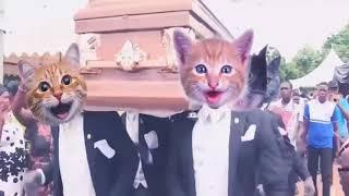 Mezarcı kediler