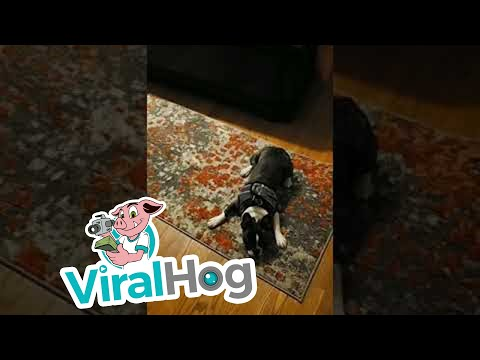 Bob Hauer - Dog Does the Rug and Run