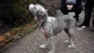 Meg - Terrier-lurcher Cross - Needs A Home! Rspca Macclesfield