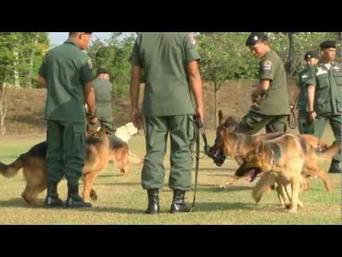 การฝึกสุนัขตำรวจ