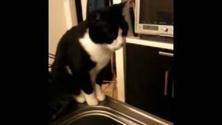 わが家のネコ、ひじきはそうめんをすすります。