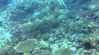 Pulau Tioman diving 24-27/04/2014 Part 2