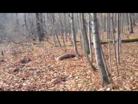 Deer Hunting Upstate New York Opening Day Gun Tracking After The Shot