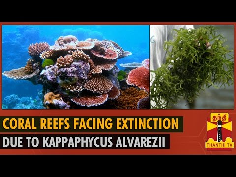 Coral Reefs in Gulf of Mannar facing Extinction - Thanthi TV