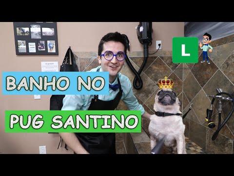 Guga Brincando de Dar Banho no Pug Santino  Música do Dog Santino  Vídeos Educativos para Crianças