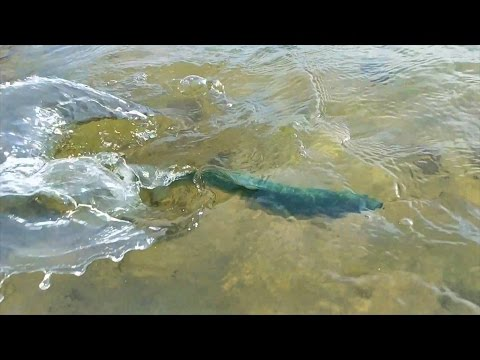 Dry Fly Fishing For Trout In Ohio?