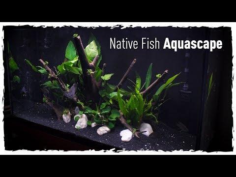 Native Fish Aquascape (Scape, Setup & Stock)