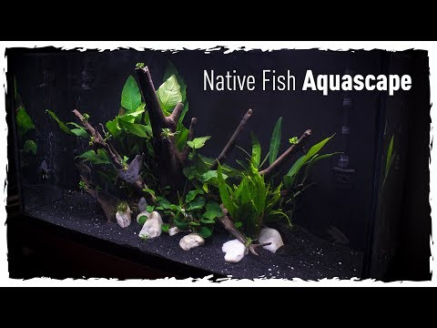 Native Fish Aquascape (Scape, Setup & Stock)