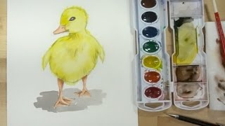 How to draw and paint a duck a baby duck (Duckling) with watercolor