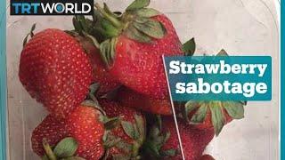 Strawberries taken off shelves in Australia