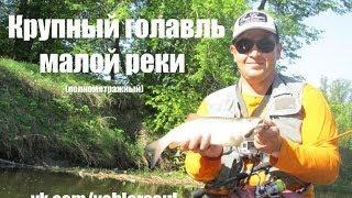 """Ловля голавля на малой реке. """"Голавль начала лета"""""""