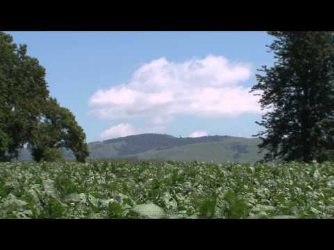 Africa's Agricultural Potential - Market Journal - March 8, 2013