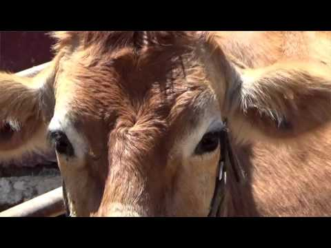 FARM ANIMALS & THEIR SOUNDS (Part 4) Babies, Toddlers, Preschool - Children's Educational Video