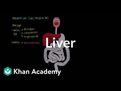 Liver | Gastrointestinal system physiology | NCLEX-RN | Khan Academy