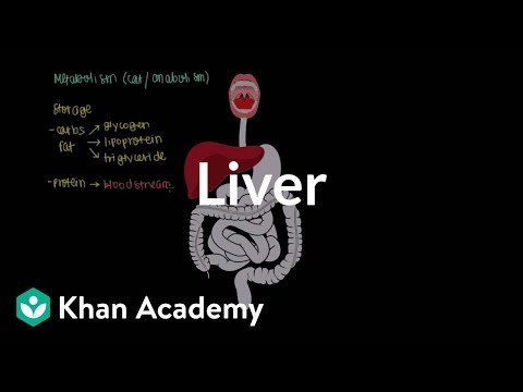 Liver | Gastrointestinal system physiology...