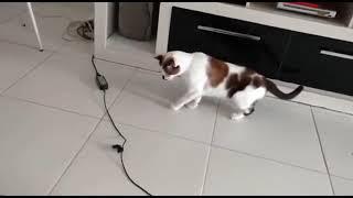 Los gatos se asustan con todo