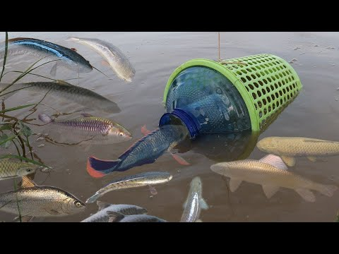 Creative Girl Make Fish Trap Using Plastic Bottle And Basket To Catch A Lot Of Fish (Part 2)