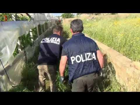 Ragusa: maxi sequestro di marijuana