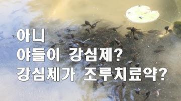 두꺼비의 변신, 강심제, 조루치료약?