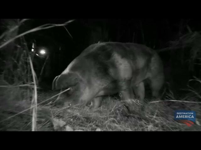 Is This Captured Beast The Elusive Hogzilla Mountain Monsters Youtube Mountain monsters is a show with professional hillbilly hunters that search for mysterious creatures that people have claimed to have seen in west virginia. is this captured beast the elusive