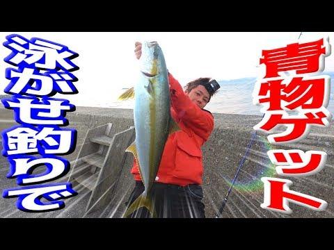 堤防から泳がせ釣りで10㎏のヒラマサを狙う!