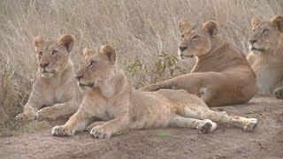 На парк дикой природы в Кении наступают стройки