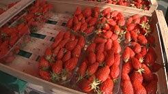 Terroir : la fraise, trésor méconnu du nord