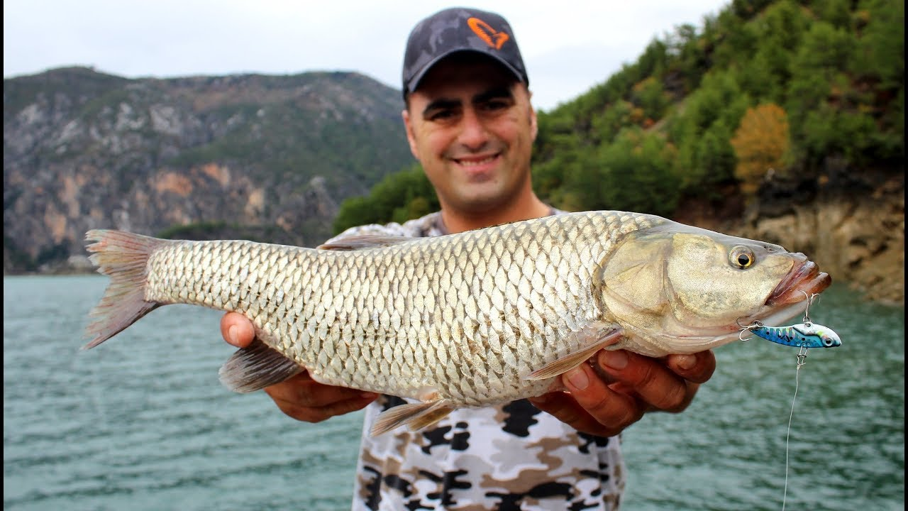 Dev Tatlı Su Kefallerine Dev Yemler Attık / Giant Chub Fishing