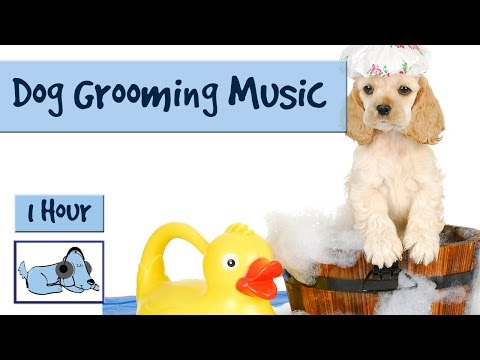 1 Hour of Calming Dog Music. Perfect for Grooming or Bathing your Pet!