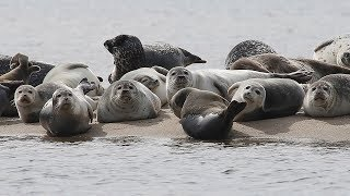 Stay away from seals resting on Jersey Shore beaches