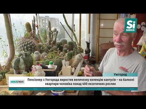 Пенсіонер з Ужгорода виростив величезну колекцію кактусів