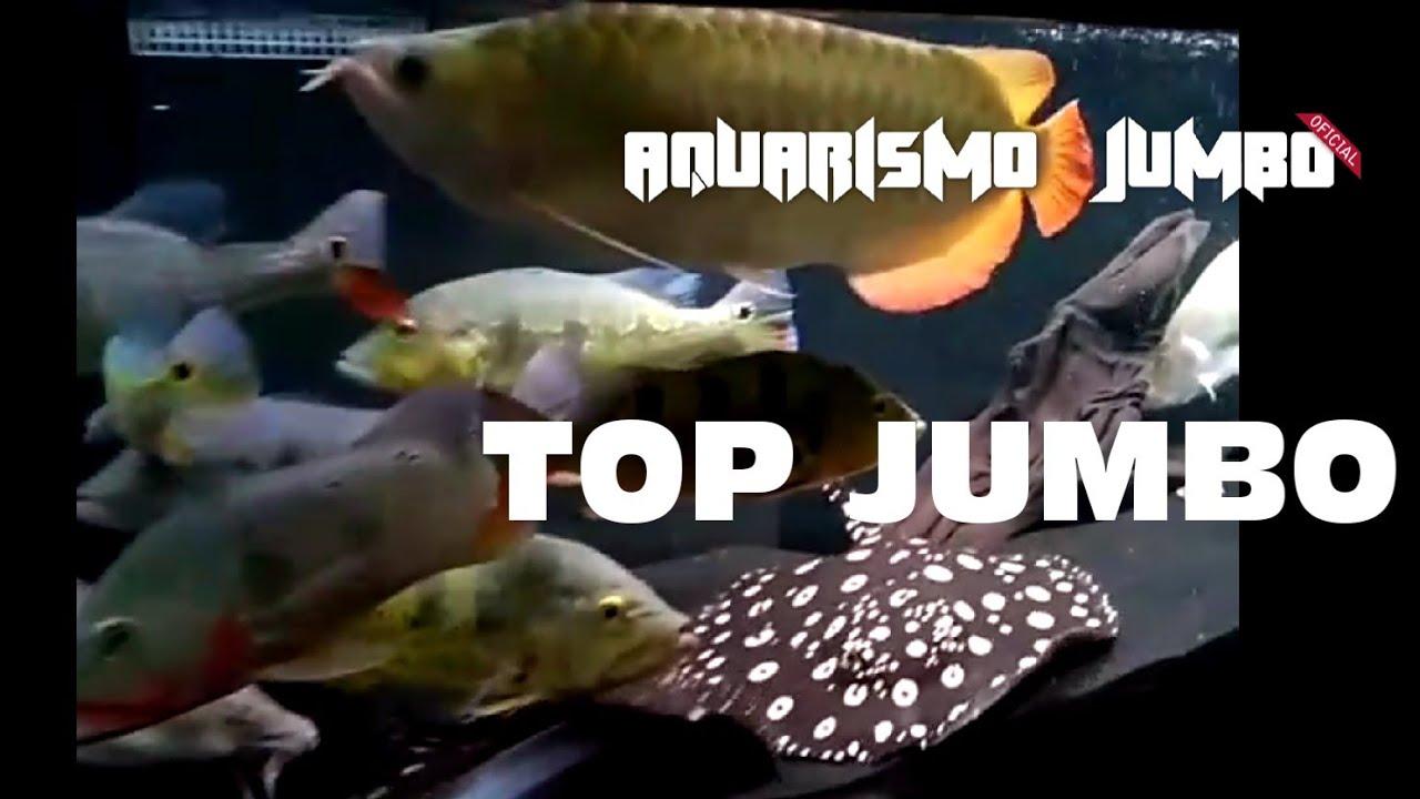 Aquarismo Jumbo Top Peixes Monstros - Aprecie Sem Moderação