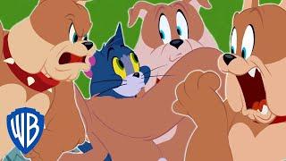 Tom et Jerry en Français | Meilleur de Spike