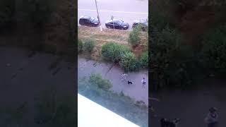 Девочка по имени Алла дресирует собаку