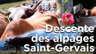 Descente des alpages La Ferme des Roches Fleuries Saint-Gervais Mont-Blanc agriculture montagne
