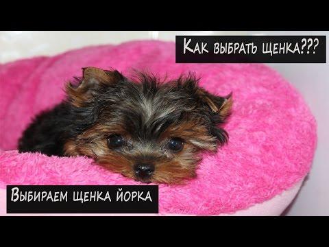 Собаководство:Как выбрать щенка??
