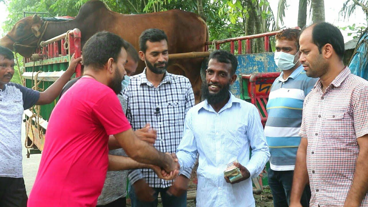 ঈদ মোবারক | আমাদের কোরবানীর গরু আনার সময় কৃষকের সাক্ষাৎকার | BD Krishi