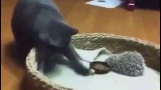 Смешные кошки! Котик и ежик!  мега прикол!