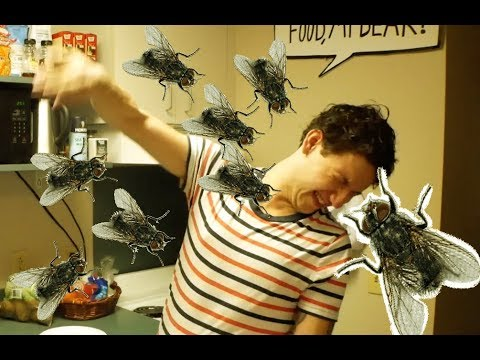 Our house is INFESTED with Flies!!!