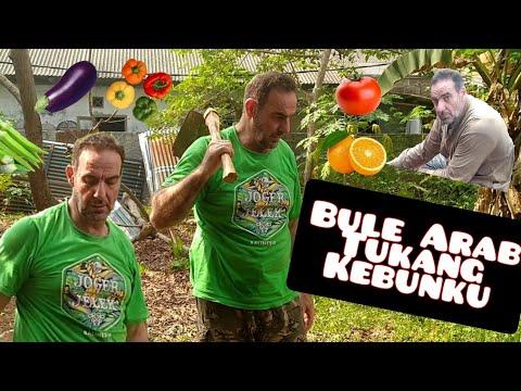 Suami Bule Arab Tanam Tomat Import, Terong, Okra, Jeruk Dan Paprika