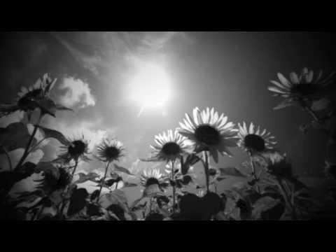 Henry Mancini Sunflower