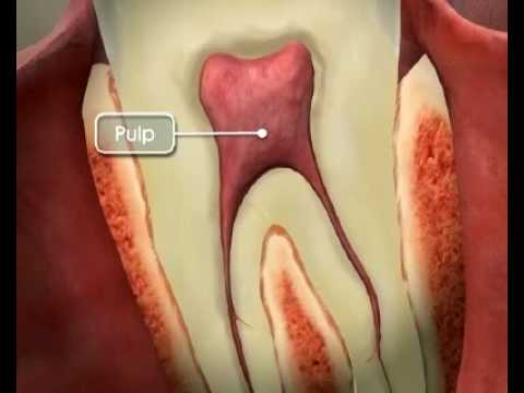 Tooth Anatomy - YouTube