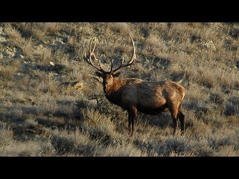 Standing Rock Elk - NDGNF