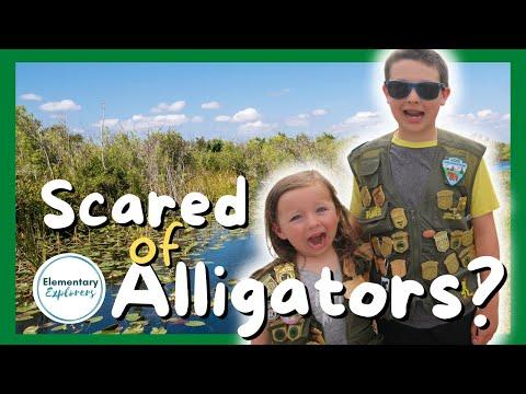 Shark Valley Tram Tour - Alligators All Around! - Everglades National Park, Florida