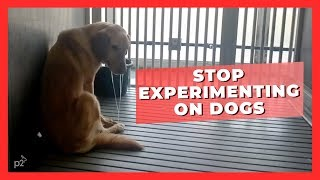 Dogs Don't Belong in a Texas A&M Laboratory