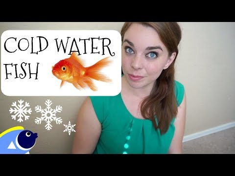 TOP 5 COLD WATER FISH FOR BEGINNERS